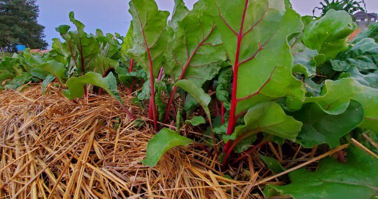 Gardening and Farming Principles